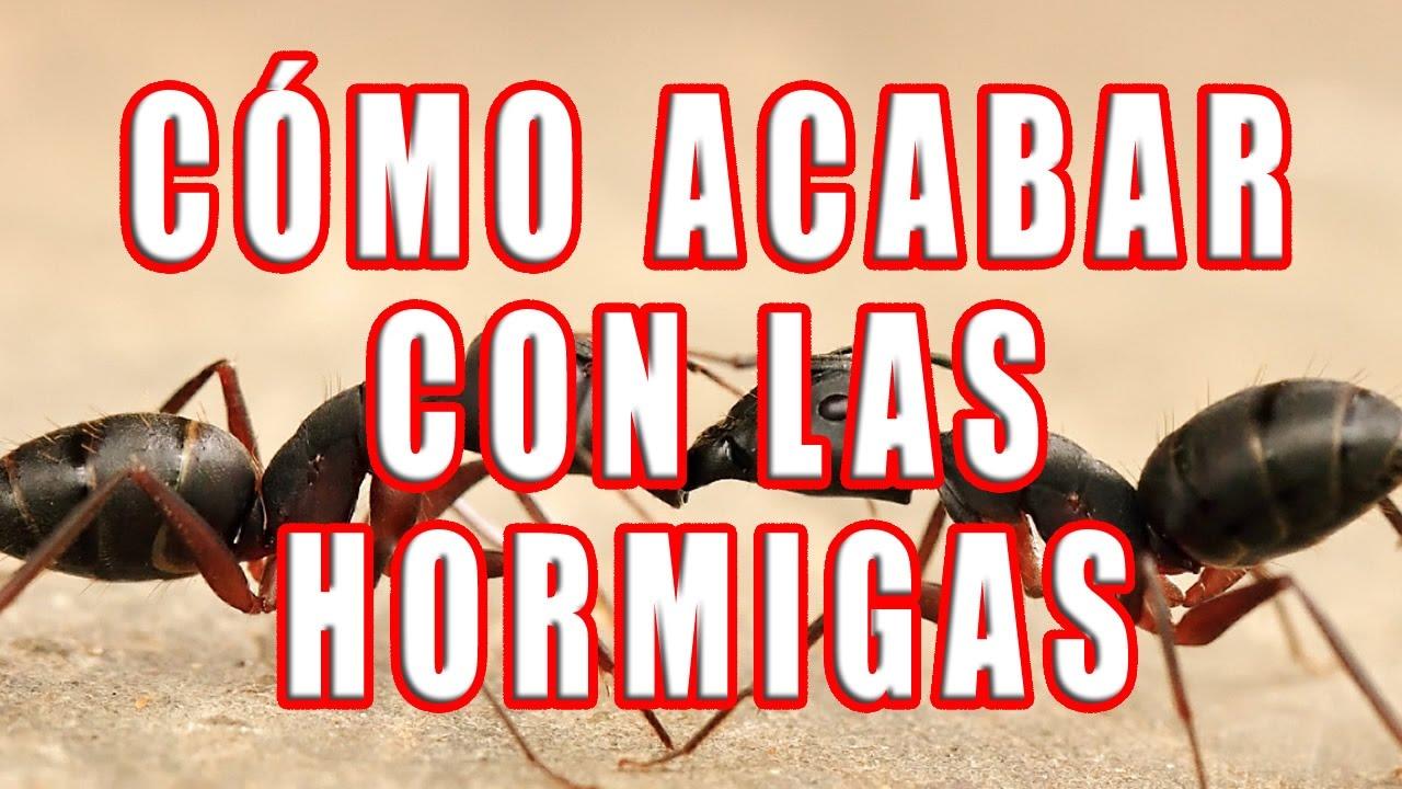 Eliminar hormigas de la cocina trendy download by tablet - Eliminar hormigas cocina ...