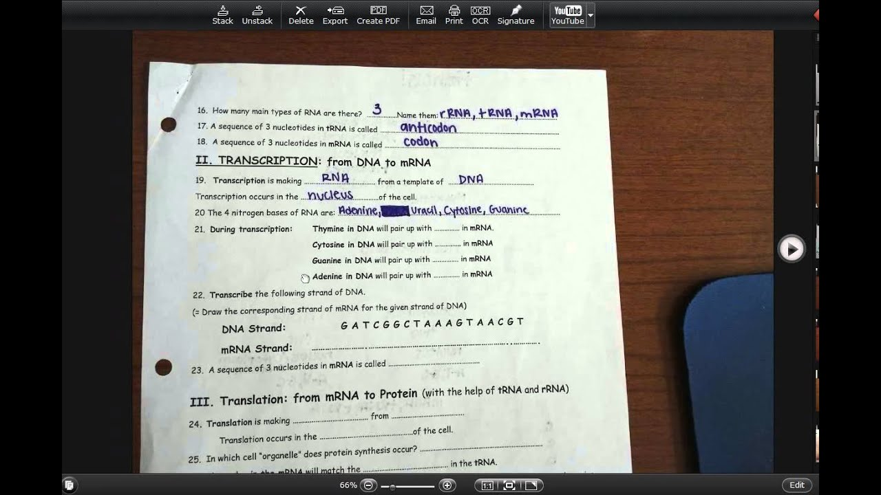 worksheet Worksheet 25 Dna Transcription dna to rna practice what you know youtube know