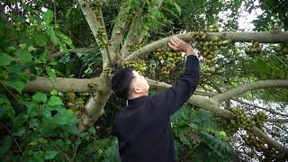 Survival Skills - Big Fish Sleepping with Primitive Girl - Meet Big Fish And Catch Fish For Cooking
