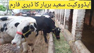 Saeed Bariar Dairy farm || Mixed dairy farming in Pakistan || Dairy farming tips||Cow farming