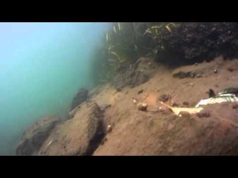 TRENCHROVER 110ROV UNDERWATER ROBOT---Underwater Sailing In West Lake HANGZHOU