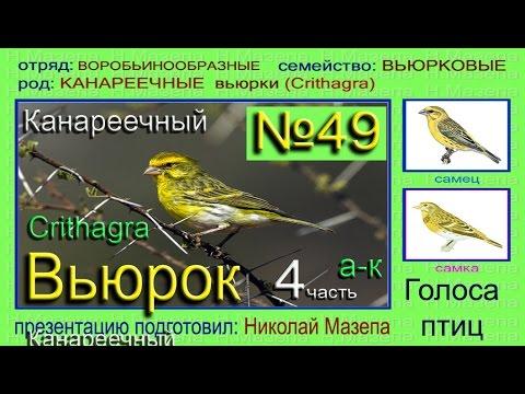 Книга Ледовое побоище Беляева, Новичкова Купить