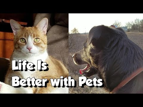 Life is Better with Pets : 1 Dog & 4 Cats Compilation