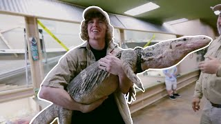 Picking Up Girls with Komodo Dragon!