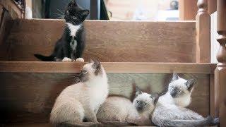 Выкинули сиамских котят Малыши ищут дом Новосибирск Приют для животных Дари добро