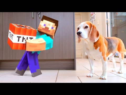 MINECRAFT GUY IN REAL LIFE WITH TNT IN OUR HOUSE! Funny Dogs Louie & Marie
