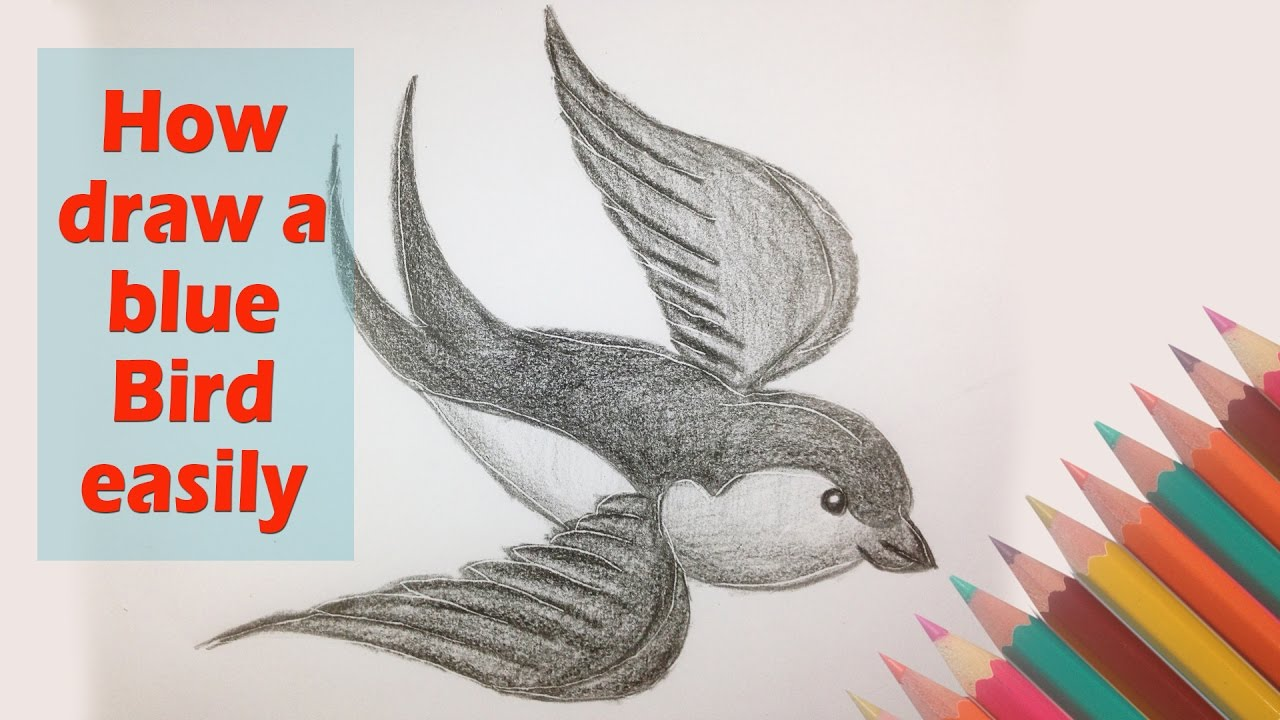 How To Draw A Blue Bird Flying Animal Drawing Art Video For Kids Youtube