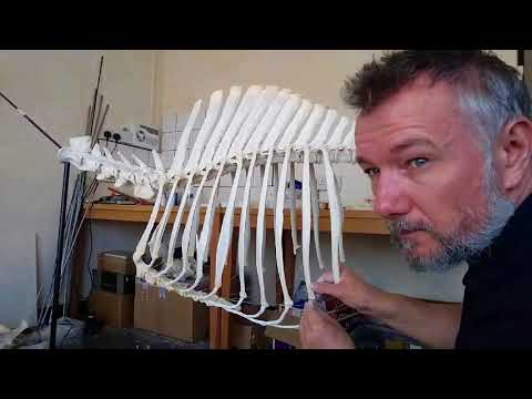 Skeleton building... epoxy clay