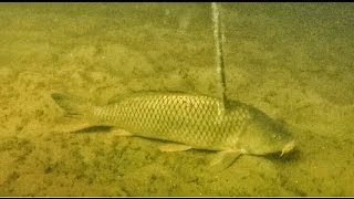 BEST Bowfishing Footage EVER! | Bowmar Bowhunting |
