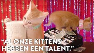 PAALDANSENDE STRIPTEASE-KATTEN in Purrlesque Show! - Mini Mocks #8