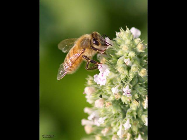 Belle Isle Nature Center | Quick Tips for Pollinators: Host Plants