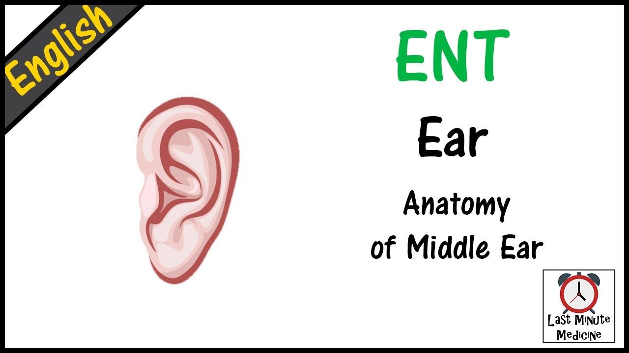 ENT 08- Ear - Anatomy of Middle Ear - YouTube