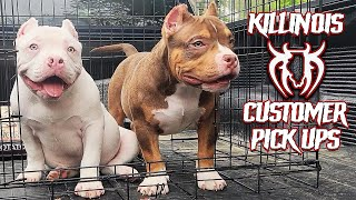 AMERICAN BULLY CUSTOMER PICK UPS FROM THE WORLD FAMOUS KILLINOIS KENNELS