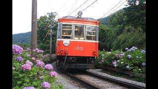 箱根登山鉄道 モハ1形103-107編成 最後の紫陽花シーズン 2019年6月