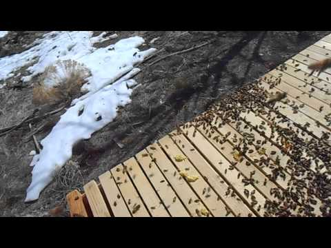 Year of BeeKeeping Episode 1