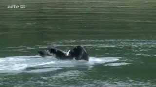 (1.2) Voyages au bout du Monde - Alaska, le Parc National de Glacier Bay