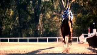 Secretariat; The Michael Jordan Of Racehorses