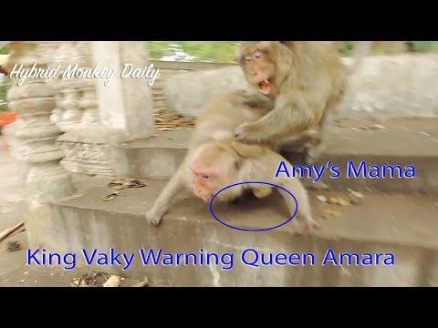 Terrible Warning In Jealous To Queen Amara Hugging Baby Amira By King Vaky / Why Vaky Angry Amara ? thumbnail