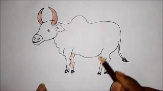 மாடு (காளை) வரைதல்/வரைவது எப்படி?,how to draw a simple bull(indian)?