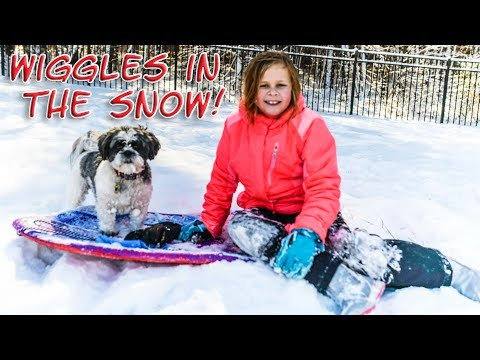 The Assistant and Wiggles have a Fun Outdoor Snow Day Play Date