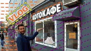 VLOG: Котокафе / Котики / Москва