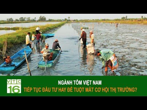 Ngành tôm Việt Nam: Tiếp tục đầu tư hay để tuột mất cơ hội?   VTC16