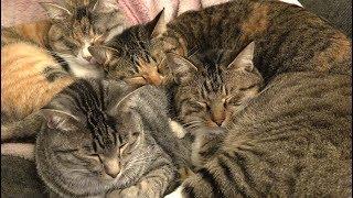 寒い冬はみんなでくっついて寝る猫たち thumbnail