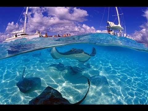 Sea Trek - Grand Cayman