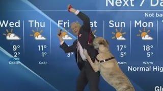 Weatherman has a 'ruff' time