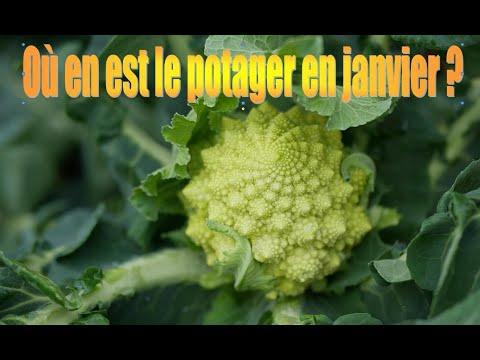 109-mon-potager-en-janvier,-recette-butternut-farcie-au-quinoa,-cranberries-et-féta