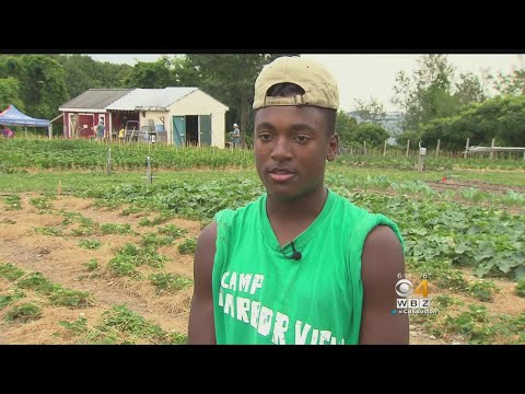 Teens Learn Business Skills, Make Money For College At Boston Farm
