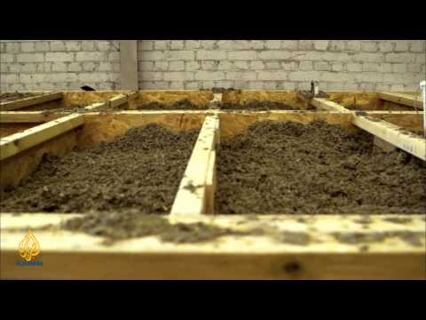 earthrise - Hempcrete & Protecting Sharks in the Philippines