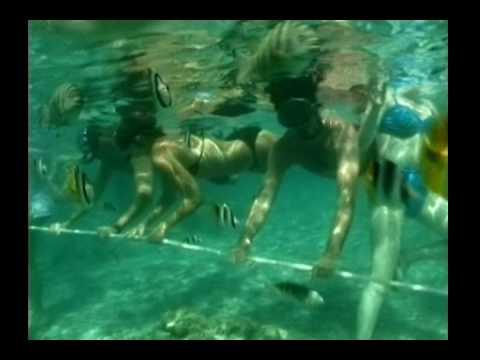 ボラボラ島のサメとエイの餌付けクルーズ