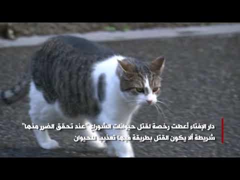 بتوقيت مصر : اليوم العالمي للقطط  - نشر قبل 10 دقيقة