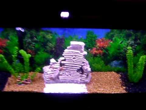 55 gallon fresh water community fish tank