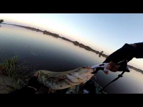 Vlog # 14 Major Craft Dodger 3-14g Обкатка , сом жерех.