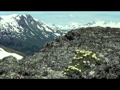 Taiga and Tundra Biomes
