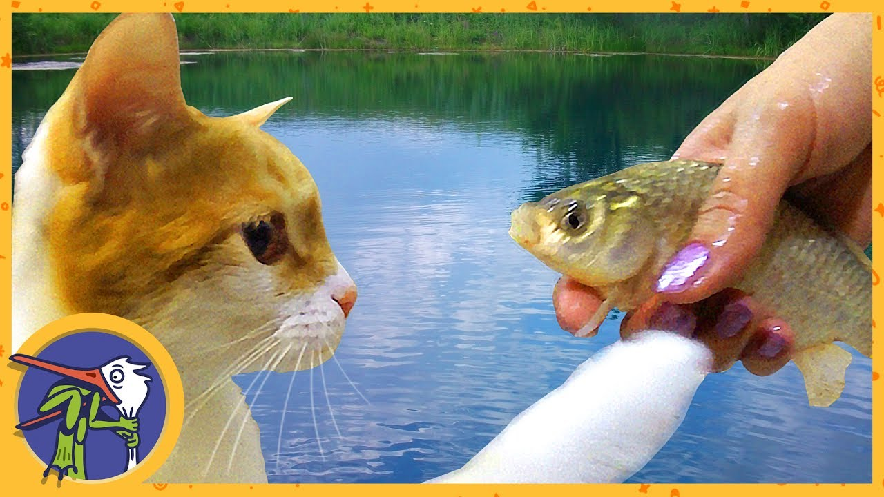 We go fishing cat ginger is fishing youtube for Cats go fishing