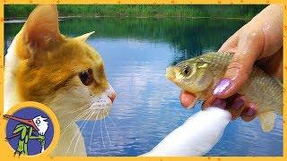 Едем на рыбалку. Котик Рыжик ловит рыбу