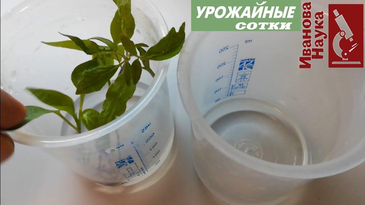 Перекись водорода в огороде: как не ОТРАВИТЬ растения. Разумное и глупое в популярных рекомендациях.