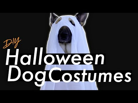 Easy Halloween Dog Costumes (DIY)