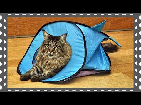 Мейн-кун котик Вилли на зимней квартире
