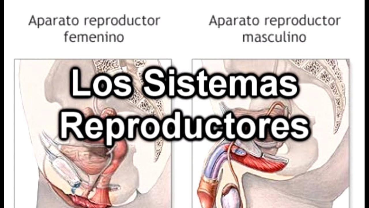 Los Sistemas Reproductores - Documental de Biología - YouTube