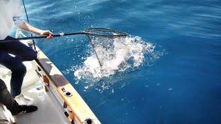 Angler fängt EXTREM wertvollen Fisch!