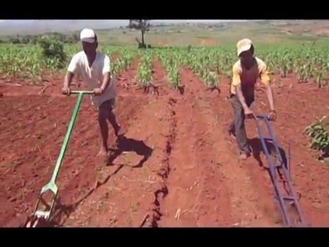 AfricaRice à Madagascar