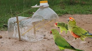 Building Most Beautiful Simple Parrot Trap Using Water Bottle