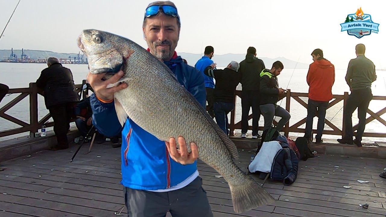 İzmir'de Dev Balıklar Var!! İskele'de Kofana, Minekop ve Kefal  - 09 MART 2020