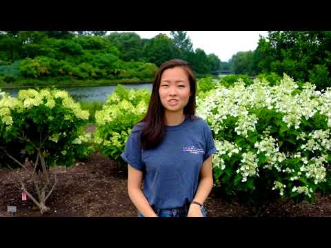 Genetic rescue in Cirsium hillii - Stephanie Roh