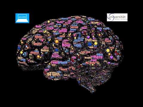 Neuroanatomische Grundlagen