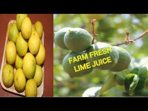 FARM FRESH LEMONADE | HEALTHY LIME JUICE | SUMMER SPECIAL | HEALTHY VILLAGE FOOD